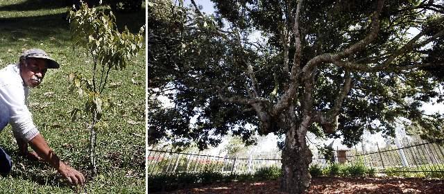 arboles-san-rafael-arbol-raro-rionegro-640x280-01022013
