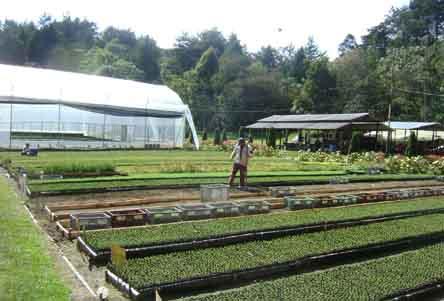 Epm producir 500 mil rboles cada a o en su nuevo vivero for Matas de viveros